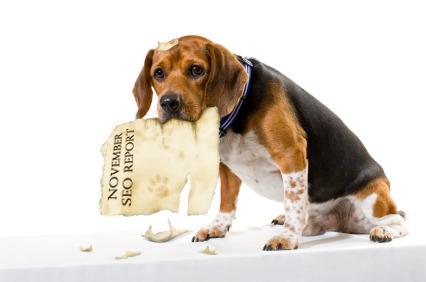 Dog Eats SEO Report